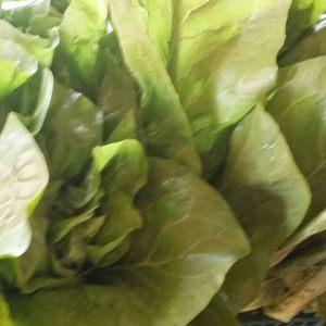 salade-oreille-de-diable